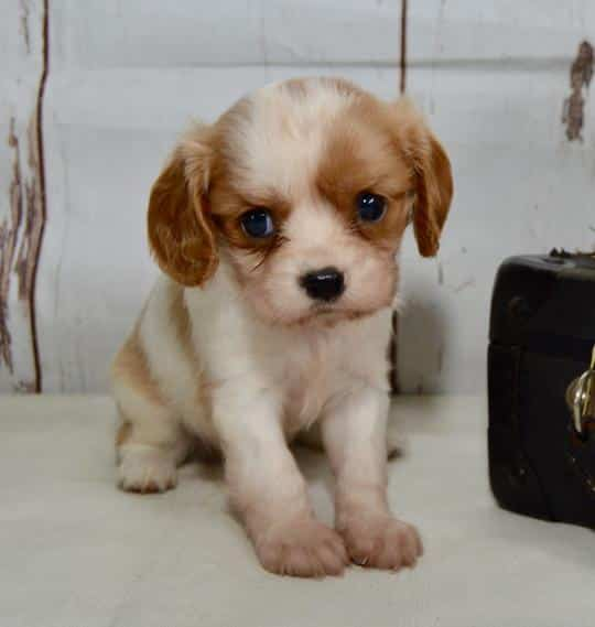 Puppies from Puppy Adoption