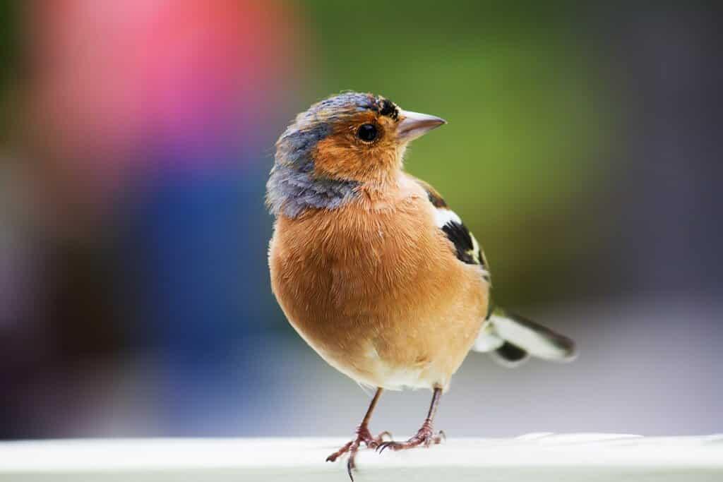 Birds Pet Care