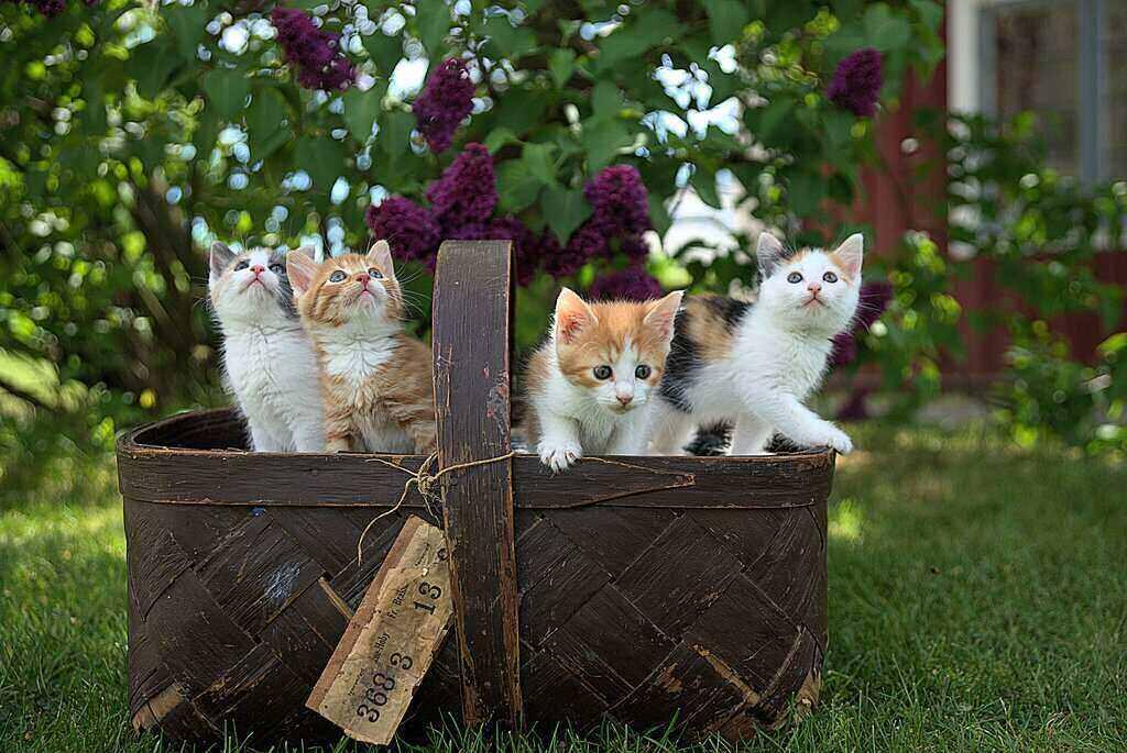 Cats Pet Care