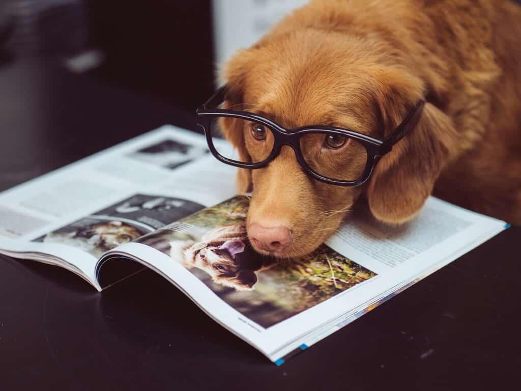 Dogs Pet Care