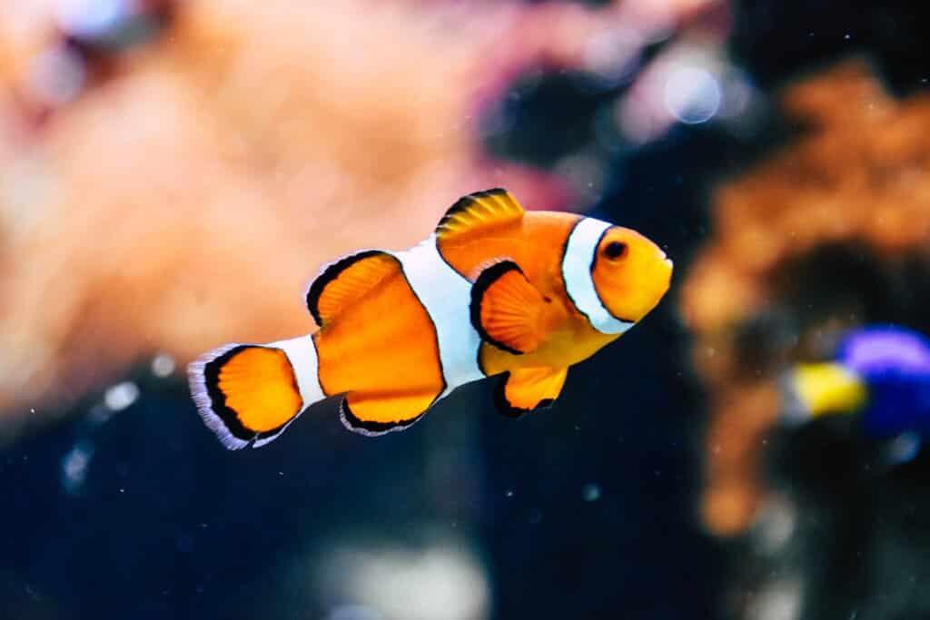 Fish Pet Care