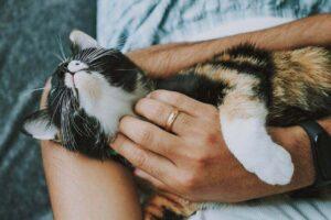Pet Care Hygiene