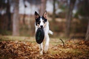 Frisbee Puppy Toy